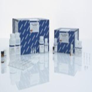 QIAamp DNA Blood Mini Kit (250), 51106 from QIAGEN | Biosave